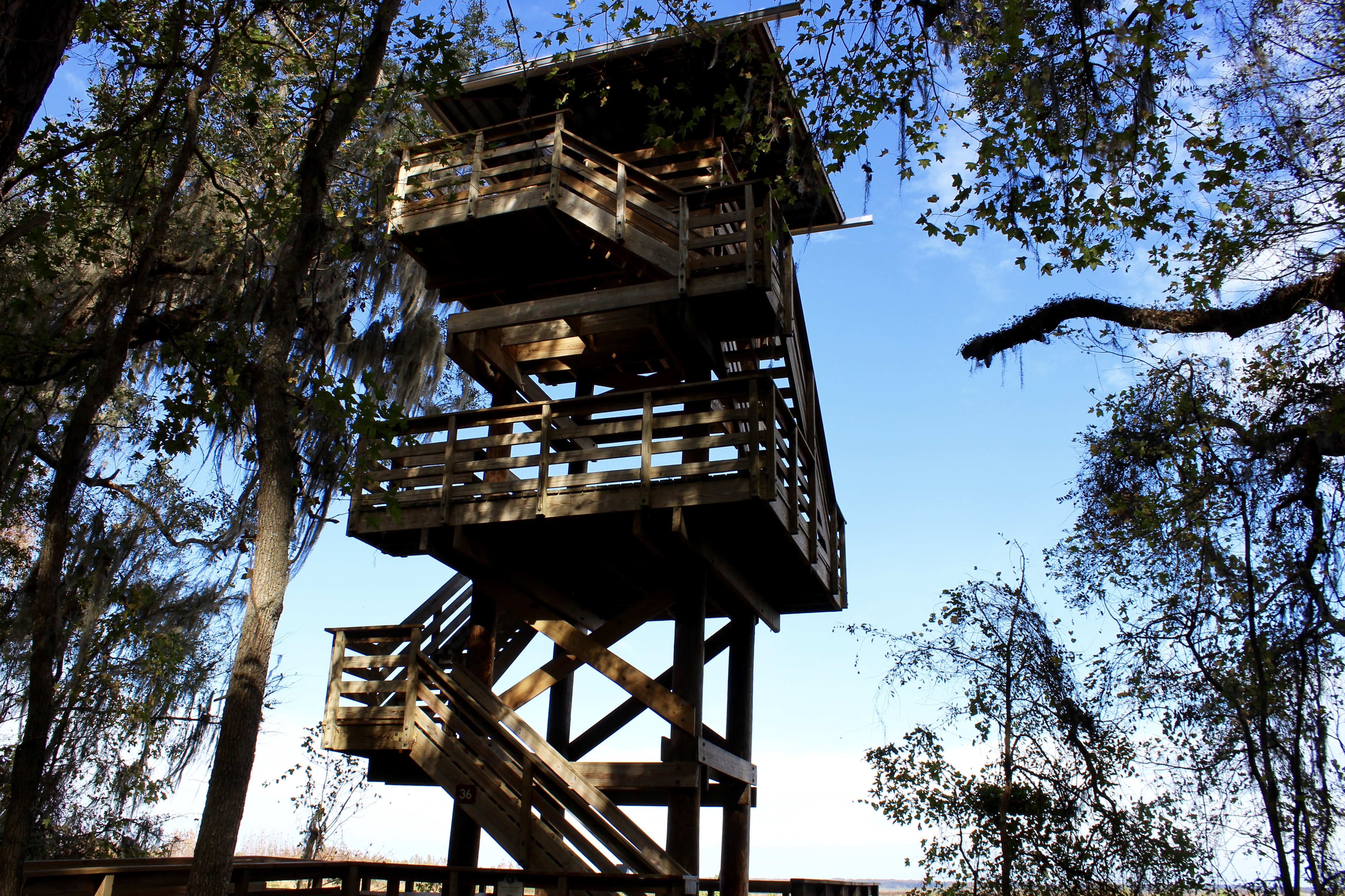 Lookout tower at Paynes Prairie Preserve State Park